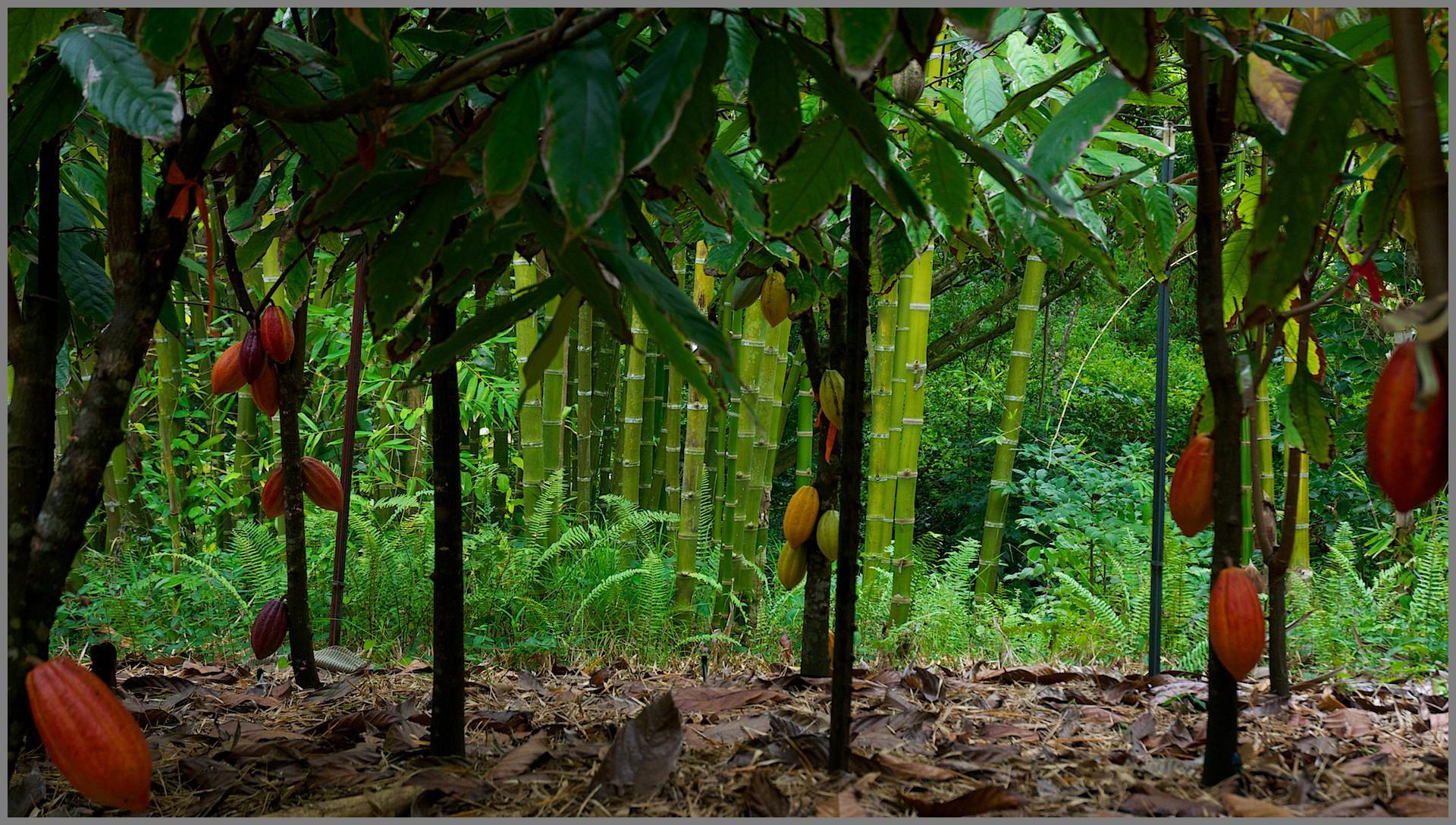پودر کاکائو کارگیل