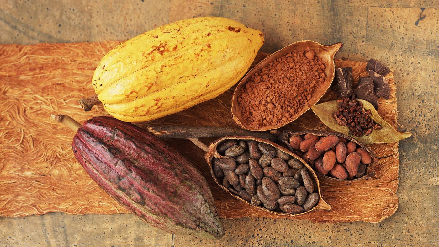 پودر کاکائو طبیعی مکمل بدنسازی