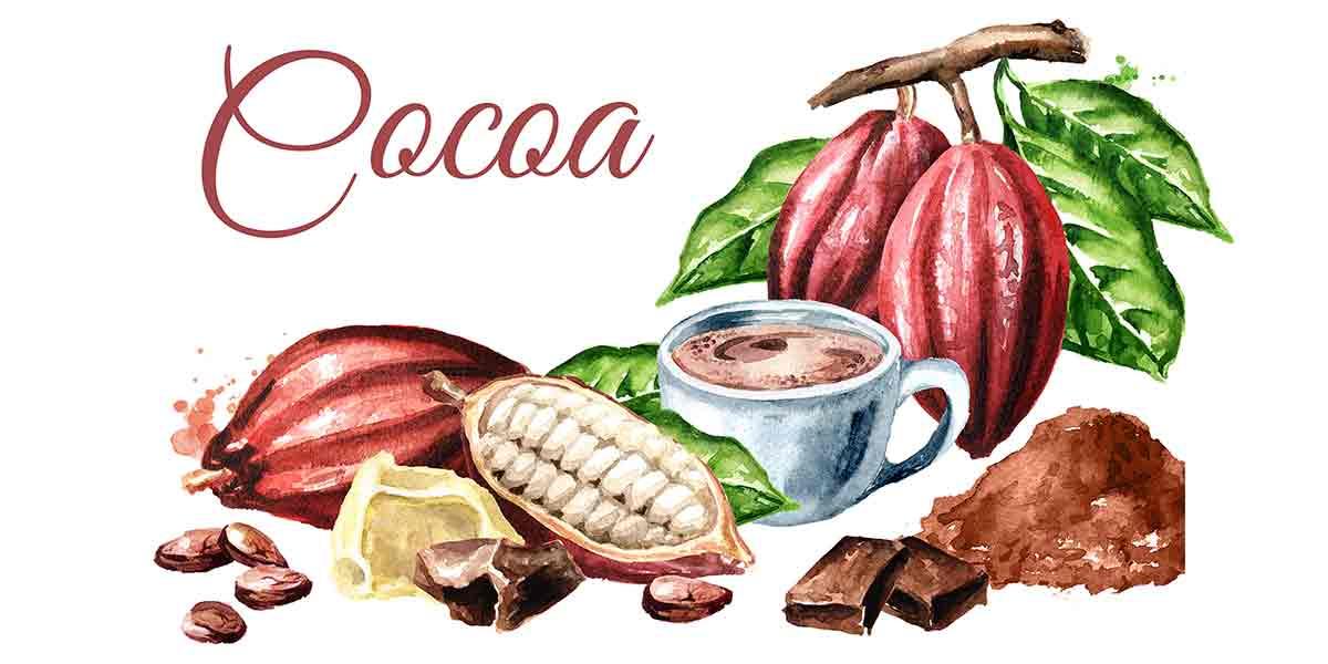 ارسال مستقیم پودر کاکائو کیلویی تلخ به سراسر ایران
